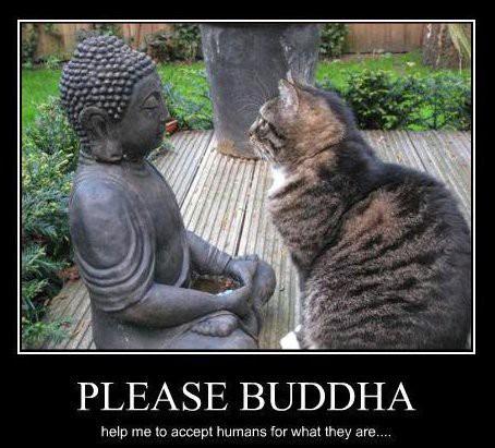 Pleasebuddha