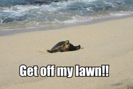 turtle-getoffmylawn