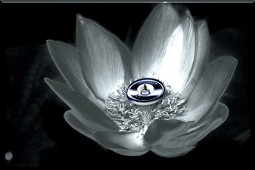 iron_lotus_2-scaled